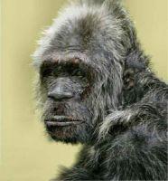 Grey Bigfoot