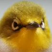 Ptitzken